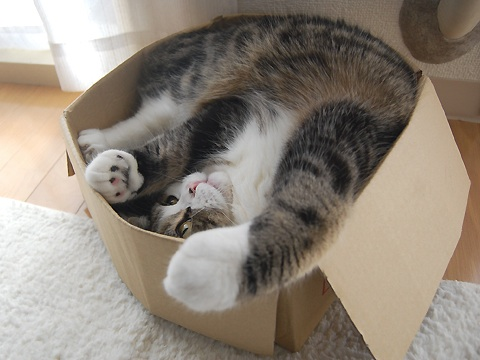 maru-the-cat