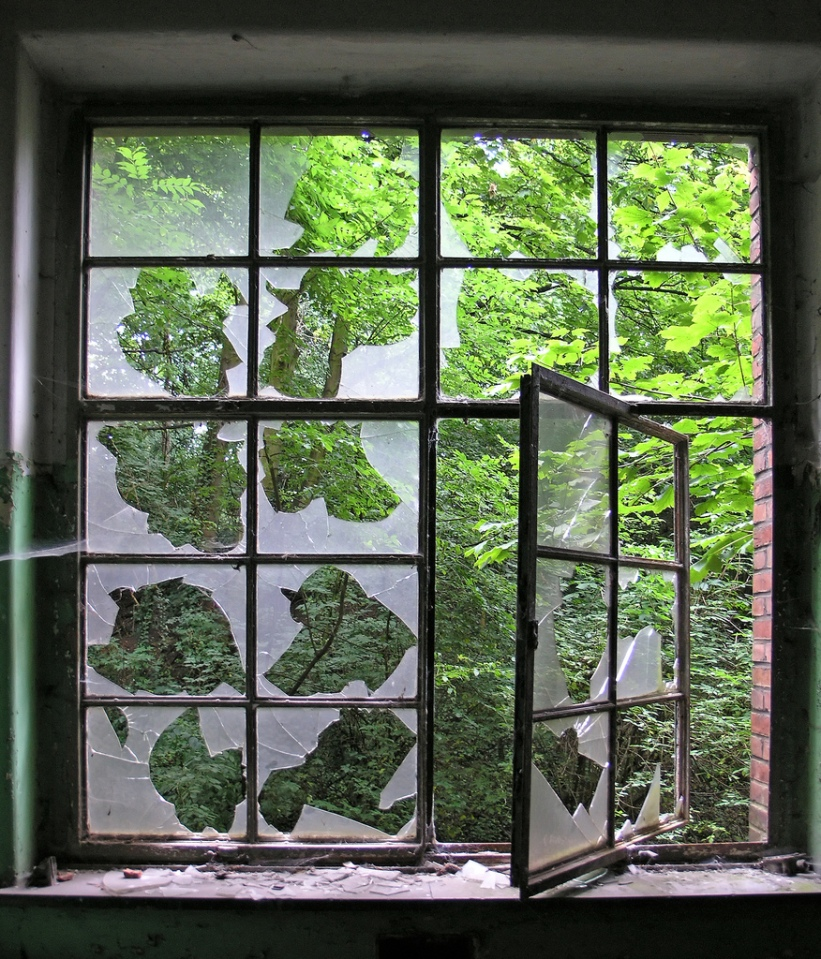 Multiple small broken window panes, through which greenery outside can be seen.